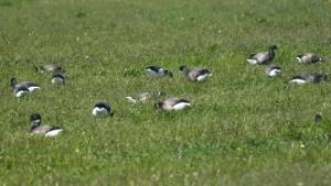 Vogelexcursie voor groepen