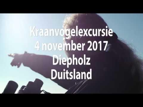 Birds4you.nl Vogelexcursie Video Verslag Kraanvogelexcursie Diepholz 4 november 2017