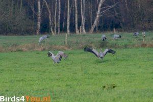 Kraanvogelexcursie