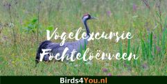 Vogelexcursie Fochteloërveen