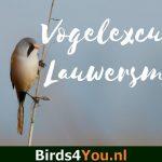 Excursion d'observation des oiseaux Lauwersmeer