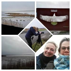 Vogels kijken op YouTube foto vogelexcursie Lauwersmeer 10 januari 2016