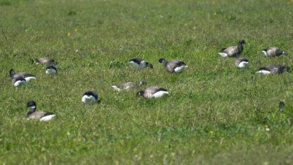 Groeps vogelexcursie