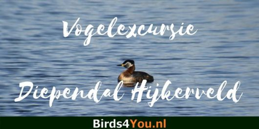 Vogelexcursie Diependal
