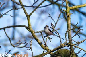 Vogelexcursie Diependal Staartmees