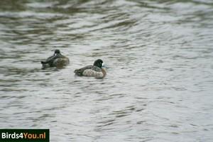 Vogels kijken Topper vrouw Lauwersmeer