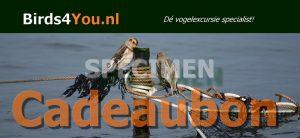 Vogelexcursie Cadeaubon van Birds4You.nl
