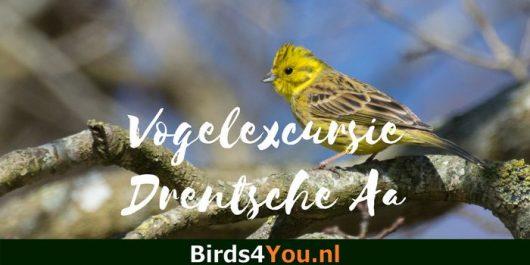 Vogelexcursie Drentsche Aa