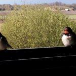Verslag vogelexcursie Diependal Hijkerveld 23 april 2016 (Drenthe)