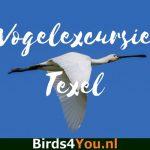 Birding Tour Texel