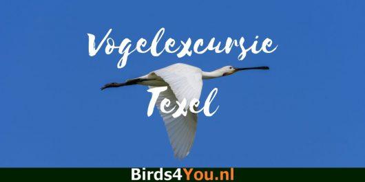 Vogelexcursie Texel
