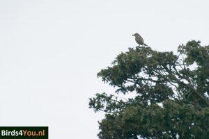 Boompieper vogelexcursie Drentsche Aa