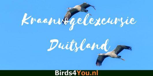 Kraanvogel excursie Diepholz Duitsland.