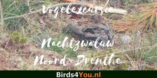 Nachtzwaluw Vogelexcursie