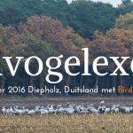 Kraanvogelexcursie verslag Diepholz 2016