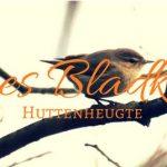 Humes Bladkoning in de Huttenheugte