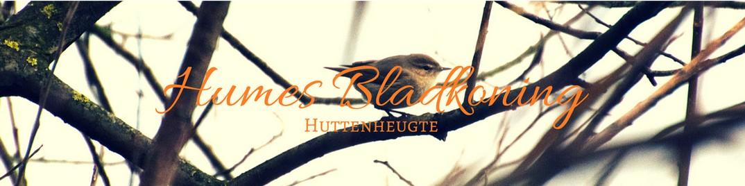 Humes Bladkoning Huttenheugte