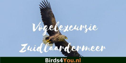 Vogelexcursie Zuidlaardermeer