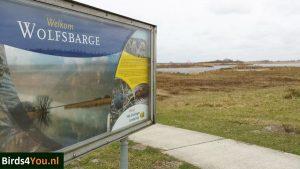 Birding tour Zuidlaardermeer Wolfsbarge