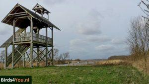 Birding tour Zuidlaardermeer watchtower at de Leine
