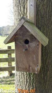 Vogelexcursie Diependal Verslag Nestkast