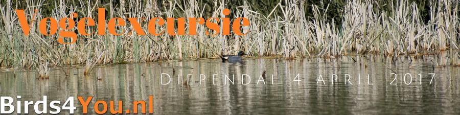 Vogelexcursie Diependal Verslag april 2017