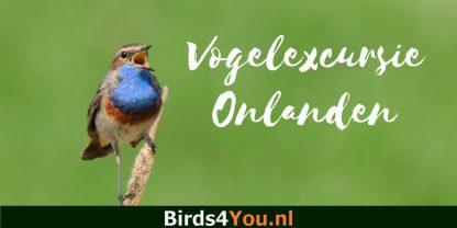 Vogelexcursie Onlanden