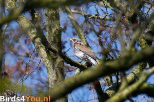 Birding tour Onlanden Onlanden Fieldfarel