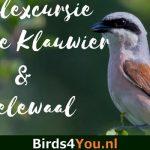 Groeps Vogelexcursie Grauwe Klauwier & Wielewaal