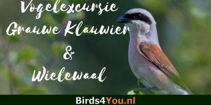Vogelexcursie Grauwe Klauwier en Wielewaal