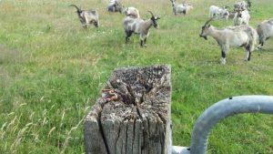 Vogelexcursie Restant muis