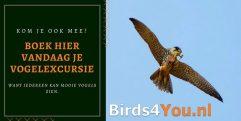 Excursion d'observation des oiseaux