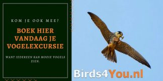 Vogelausflug
