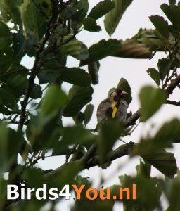 vogelexcursie Putter