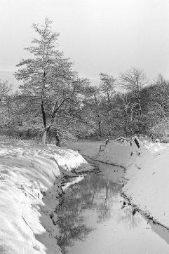 Runsloot in de winter