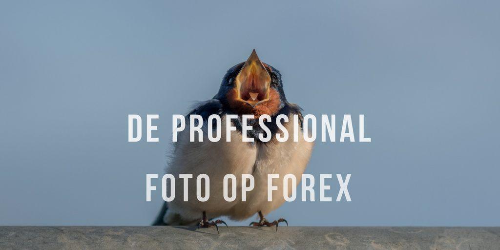 Foto op Forex , Wanddecoratie Forex