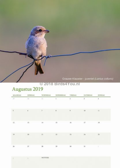 Vogelkalender Augustus