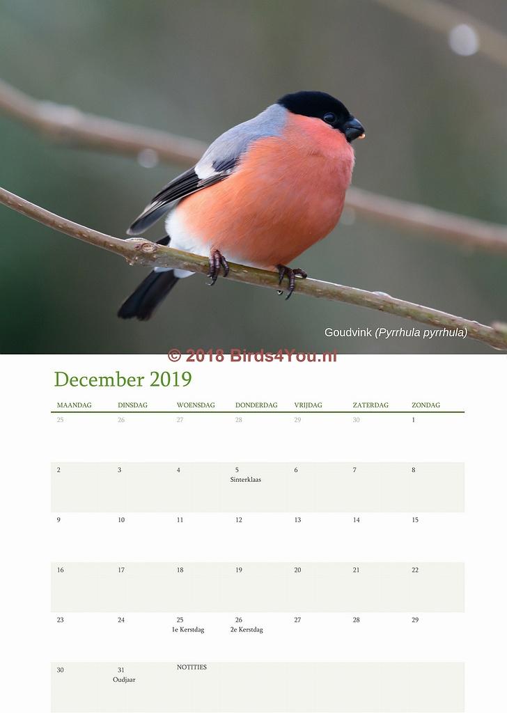 Vogelkalender December