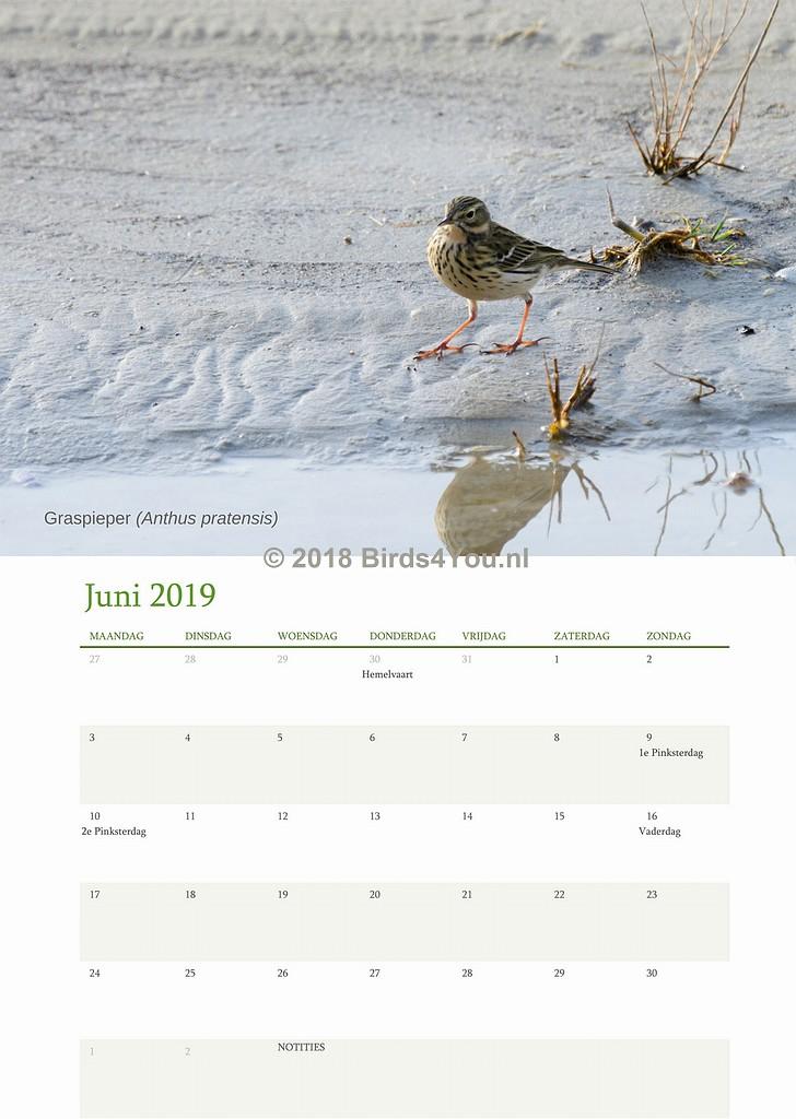 Vogelkalender Juni