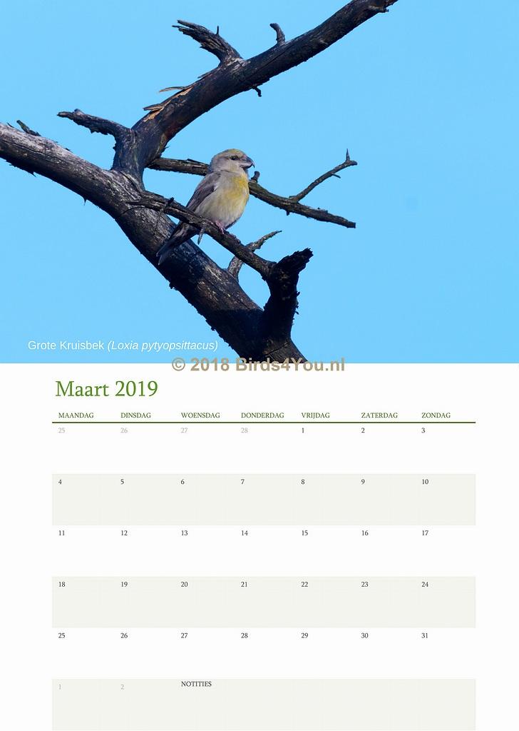 Vogelkalender Maart