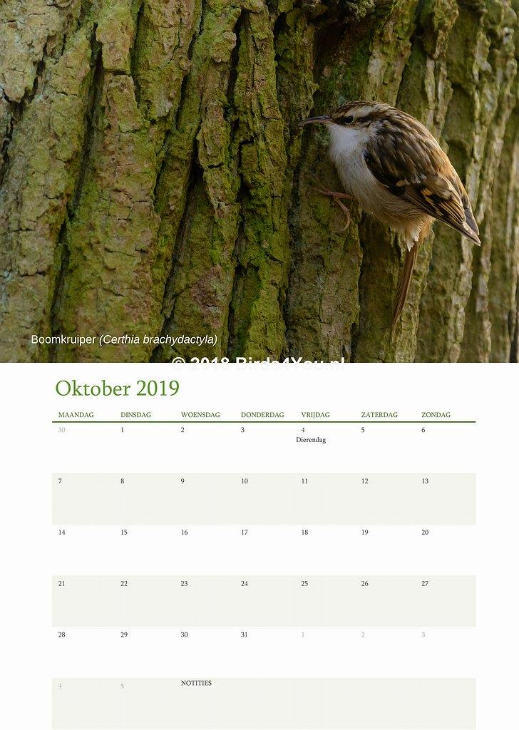 Vogelkalender Oktober