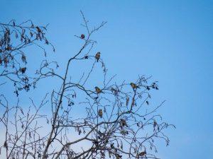 Vogelexcursie Lauwersmeer Putters