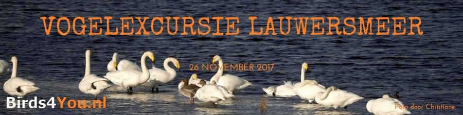 Vogelexcursie Lauwersmeer november 2017