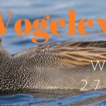 Verslag Vogelexcursie Wintergasten