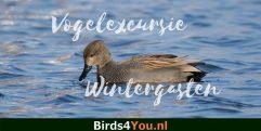 Vogelexcursie Wintergasten