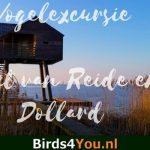 Vogelexcursie Punt van Reide en Dollard