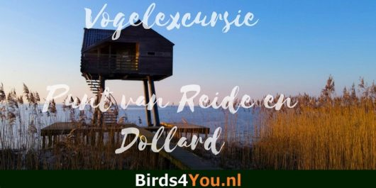 Vogelexcursie Groningen Punt van Reide en Dollard