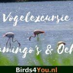 Flamingo Duitsland & Oehoe Winterswijk vogelexcursie
