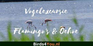 Flamingo en Oehoe Vogelexcursie