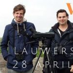 Birdwatching report private birding excursion Lauwersmeer 28 April 2018